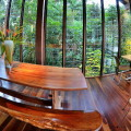 rainforestdining