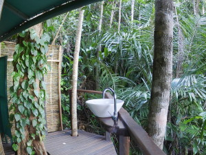 Rainforest Huts